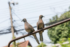 oiseaux de couples Photo stock