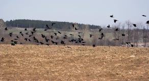 Oiseaux de Flaing photo stock