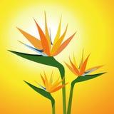 Oiseaux de Fleur-vecteur de paradis Image stock