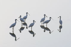 Oiseaux de groupe Photos libres de droits
