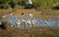 Oiseaux de la Floride Images libres de droits