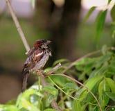 Oiseaux de la Grande-Bretagne et de l'Europe Photographie stock