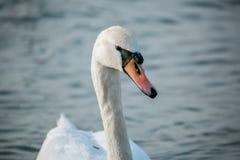 Oiseaux de la mer Images stock