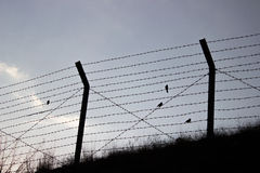 Oiseaux de liberté Photos libres de droits