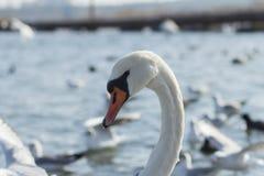 Oiseaux de mer Image stock