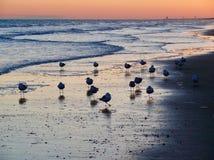 Oiseaux de mer au coucher du soleil photographie stock