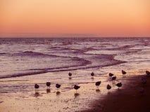 Oiseaux de mer au coucher du soleil image libre de droits