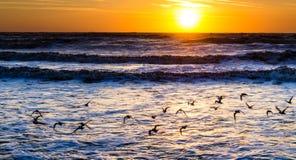 Oiseaux de mer au lever de soleil Images stock