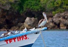 Oiseaux de mer sur le Tobago image stock