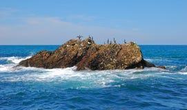Oiseaux de mer sur une roche Photos stock