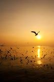 Oiseaux de mouette Image stock