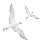 Oiseaux de mouettes de vol Photographie stock libre de droits
