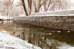 Oiseaux de parc naturel de neige d'hiver Photographie stock