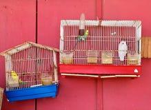 Oiseaux de perruche dans les cages avec le fond rouge photographie stock libre de droits