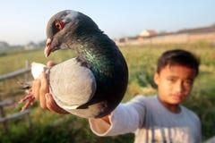 Oiseaux de pigeons Photo libre de droits
