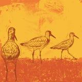Oiseaux de plage au coucher du soleil Photo stock