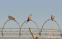 Oiseaux de prison photo stock