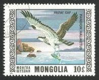 Oiseaux de proie, balbuzard Image stock