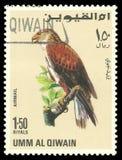 Oiseaux de proie, faucon ferrugineux Photographie stock