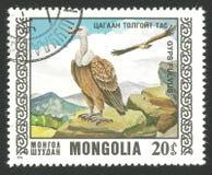 Oiseaux de proie, Griffon Vulture Photographie stock libre de droits