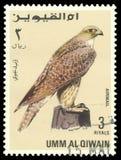 Oiseaux de proie, Gyrfalcon Photos stock