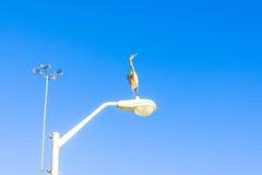 Oiseaux de refroidissement de héron de grand bleu sur la plage Photographie stock libre de droits