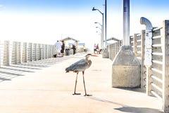 Oiseaux de refroidissement de héron de grand bleu sur la plage Photo libre de droits