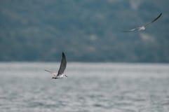 Oiseaux de rivage Images stock