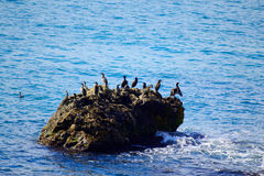 Oiseaux de roche de mer photographie stock libre de droits