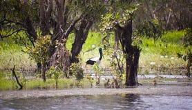 Oiseaux de stationnement national de Kakadu Photographie stock libre de droits