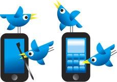 Oiseaux de Twitter Images libres de droits