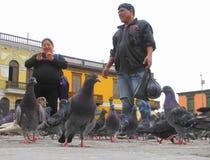 Oiseaux de ville Photo libre de droits