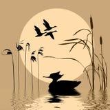Oiseaux de vol illustration stock