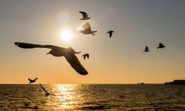 Oiseaux de vol photo libre de droits