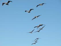 Oiseaux de vol Images stock
