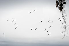 Oiseaux de vol Photographie stock