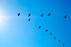 Oiseaux de vol photos libres de droits