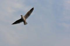 Oiseaux de vol et abrégé sur ciel Les oiseaux de la liberté Images libres de droits