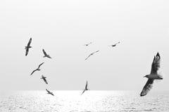 Oiseaux de vol noirs et blancs Photo stock