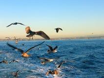 Oiseaux derrière un bateau Photos libres de droits