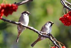 Oiseaux des steppes Photo libre de droits