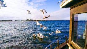 Oiseaux devant un bateau ou un chalutier de pêche mangeant des poissons Photographie stock libre de droits