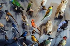 Oiseaux du monde Photographie stock