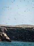 Oiseaux effectuant le vol Ballestas images stock