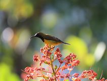 Oiseaux en belles fleurs de jardin Photographie stock libre de droits