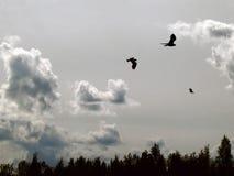 oiseaux en ciel Photographie stock