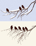Oiseaux en hiver et au printemps Images stock