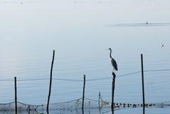 Oiseaux en La Albufera, Valence Photographie stock libre de droits