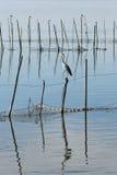 Oiseaux en La Albufera, Valence Images libres de droits