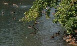 Oiseaux en Lincoln Park, Chicago images stock